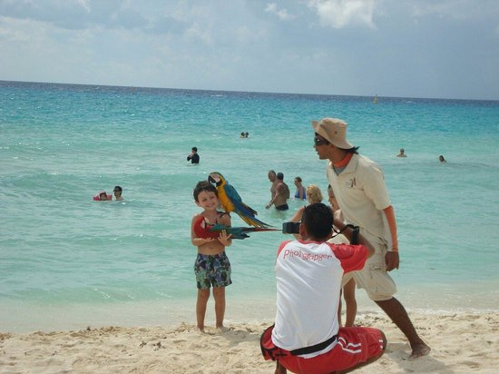 Sandos Playacar Beach Resort: Matu y las guacamayas
