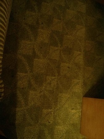 Platinum Hotel and Spa : filthy stained carpet in living room