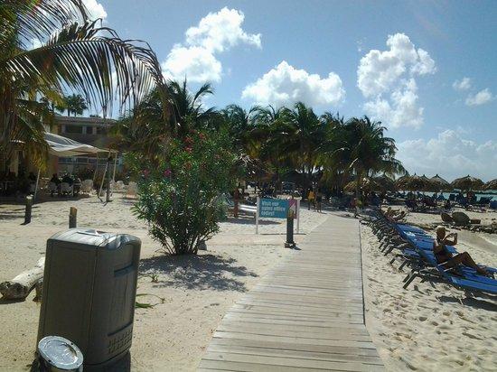 Divi phoenix picture of divi aruba phoenix beach resort palm eagle beach tripadvisor - Divi aruba beach ...