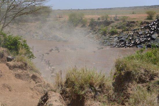 Mara Bushtops : Mara river crossing