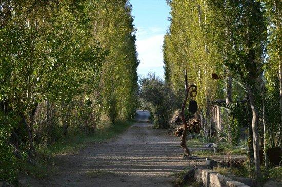 Pircas de Puyuta: Camino de entrada.