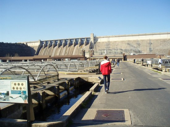Below table rock lake dam picture of shepherd of the for Branson fish hatchery