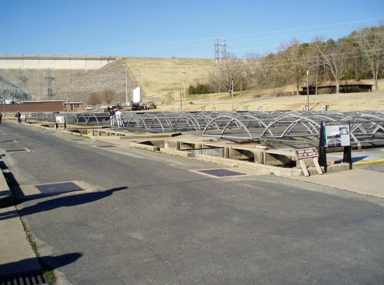 Shepherd of the Hills Fish Hatchery : many tanks