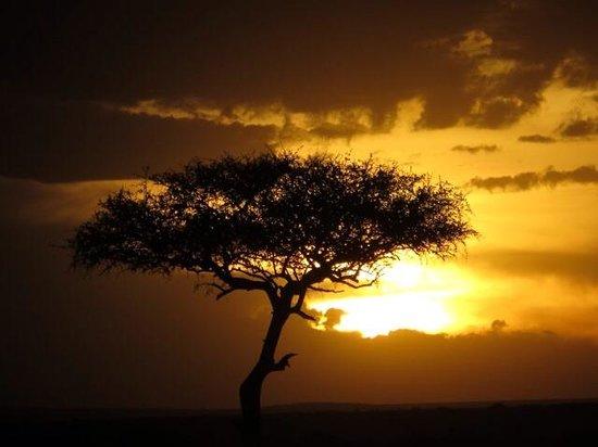 Mara Intrepids Luxury Tented Camp : Classic African Sunset