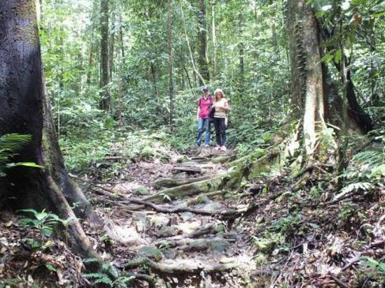 Kubah National Park : typical state of hiking trails in Kubah