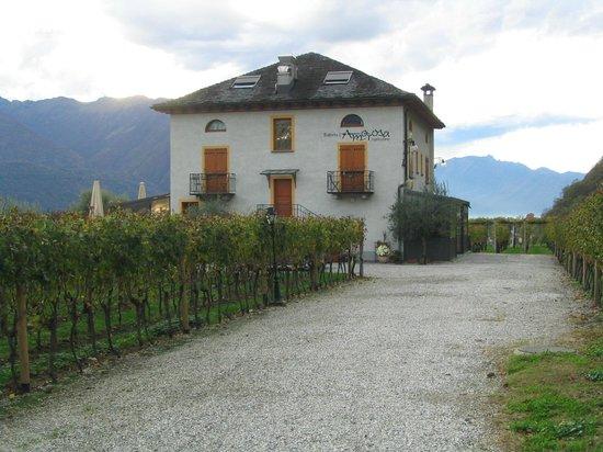 Locanda Castagnola: vue de l'hôtel entouré de son vignoble
