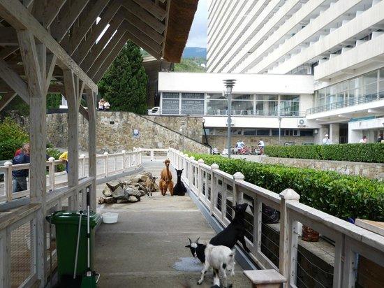 Yalta Intourist Hotel: Живой уголок