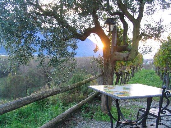 Locanda Castagnola: vue sur la vallée depuis la terrasse