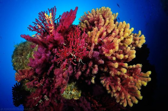 Diving Center Colera: Gorgonias