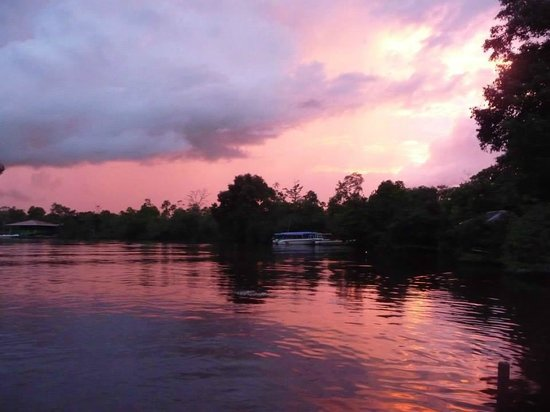 Proboscis Monkey River Cruise