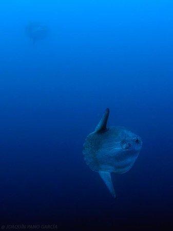Diving Center Colera: Pez Luna