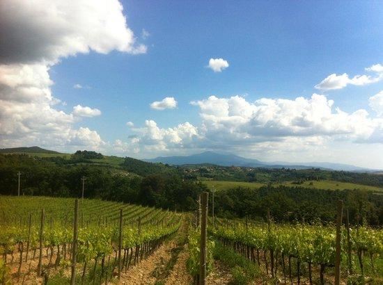 Fattoria del Colle - Agriturismo : Landscape