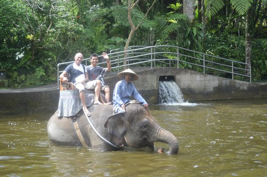 Mason Elephant Lodge: wow