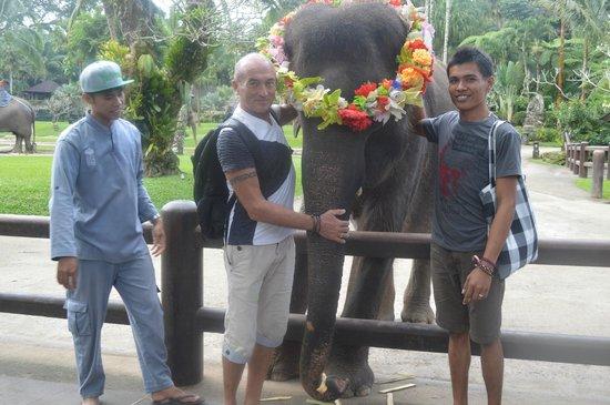 Mason Elephant Lodge: action