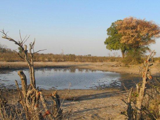 Elephant's Eye, Hwange: Watering hole on Concession