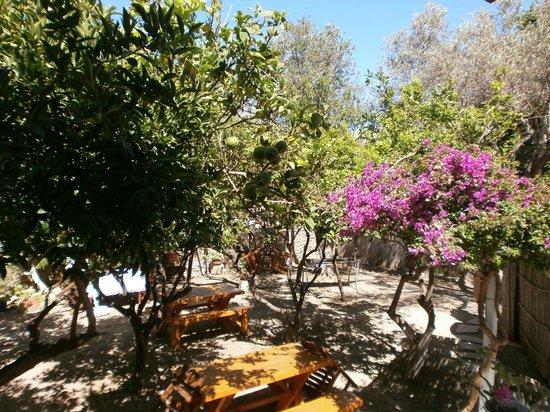 Hotel Aegean Village: Jardin