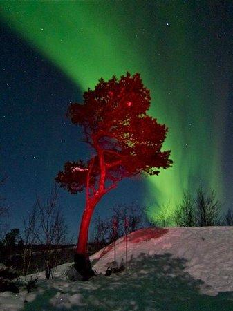 LapplandMedia & PhotoAdventures: abisko