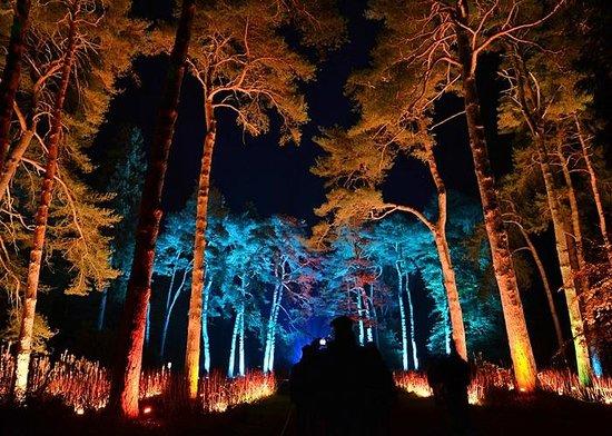westonbirt arboretum enchanted christmas lights - Enchanted Forest Christmas Lights