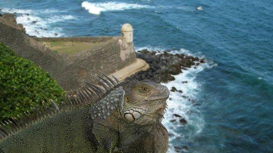 Castillo de San Cristobal: Iguana against a garita
