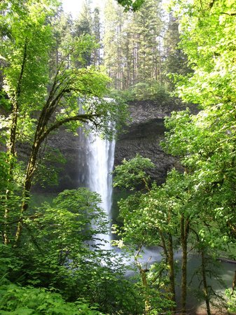 Silver Falls State Park : view of the falls 3