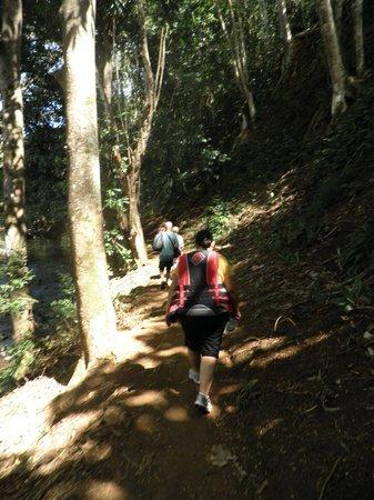 Wailua Kayak Adventures : The trail