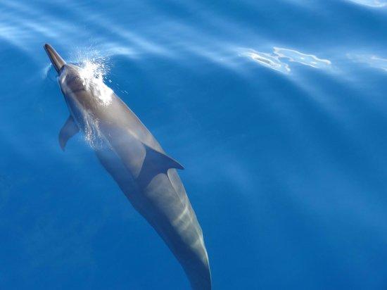Namori Tours Sortie Dauphins : nage avec les dauphins