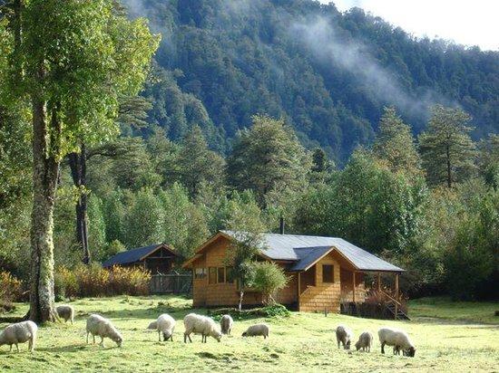 El Pangue Lodge: Cabañas / Cabains