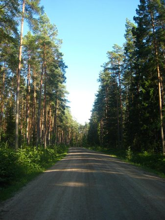 Kokkola Tourism Ltd.: Uno dei tanti meravigliosi boschi