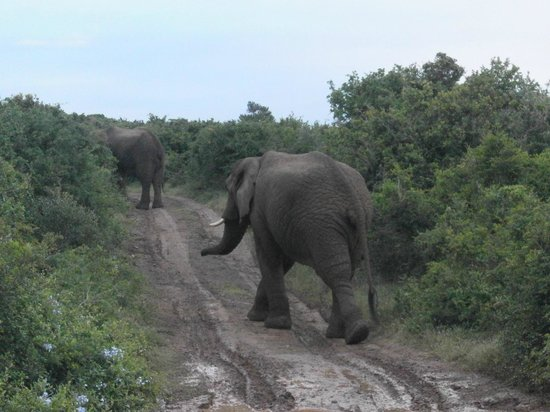 Kariega Game Reserve: Afternoon Game Drive