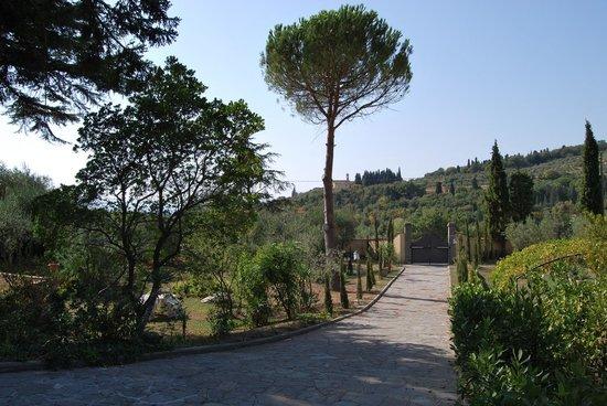 B&b Ulivi di Castello: Particolare giardino e vialetto accesso
