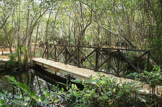 Dalmanuta Gardens - Ayurvedic Resort & Restaurant: Herbal gardens & lakes in the property