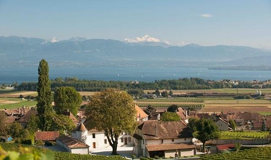 Chateau Le Rosey: View of Mont Blanc from the vineyard
