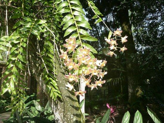 Orchid Garden: orquidea