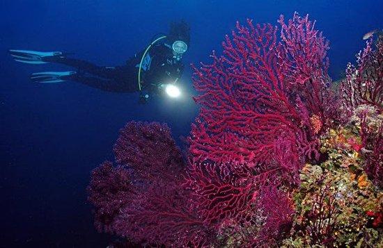 Diving Group Portofino: Portofino Marine Park, Photo Frank Schneider