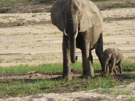 Mfuwe Lodge - The Bushcamp Company: 10 day old baby