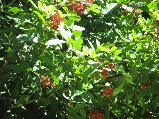 Restaurante DiVino: More garden views