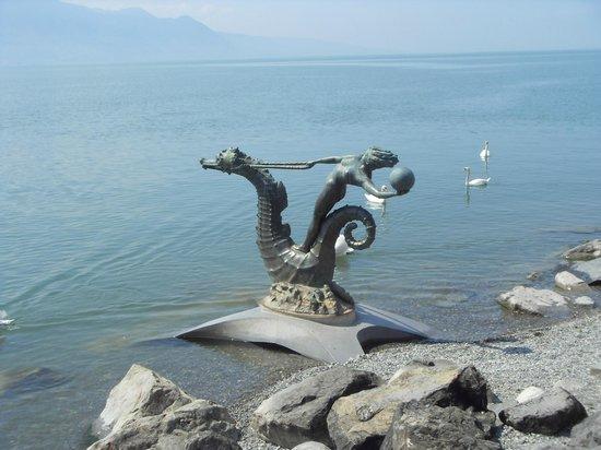 Lago de Ginebra: Лебеди в Женевском озере.