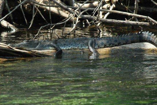 Melia Panama Canal : Fauna