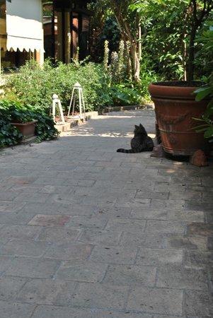 Hotel Porta San Mamolo: Cat in the courtyard