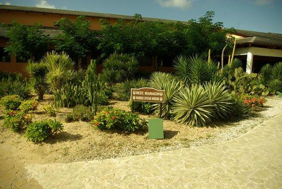 Catalonia Bavaro Beach, Casino & Golf Resort : кактусы