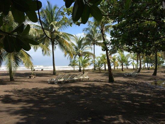 Turtle Beach Lodge: turtle beach