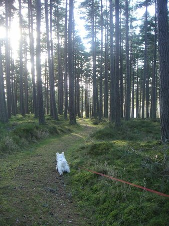 Rosegrove Guest House : Taking the dogs out for a walk in Curr Woods