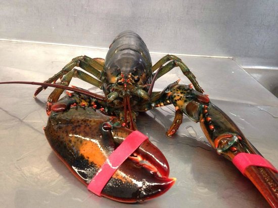 Feby's Fishery: Lobster Dinner Monday and Wednesday $19.99