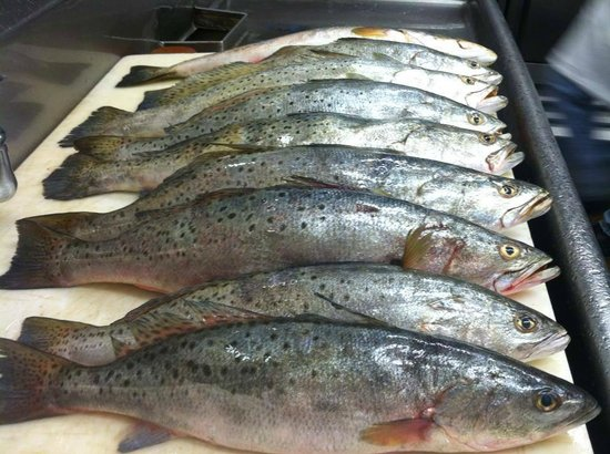 Feby's Fishery: Local Sea Trout