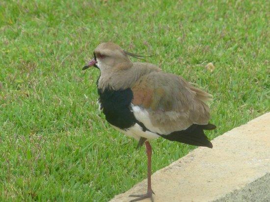Belmond Hotel das Cataratas: Birds of the park