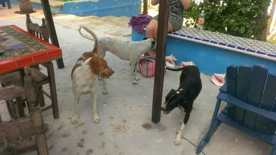 El Milagro Beach Hotel and Marina : Friendly dogs looking for some attention.
