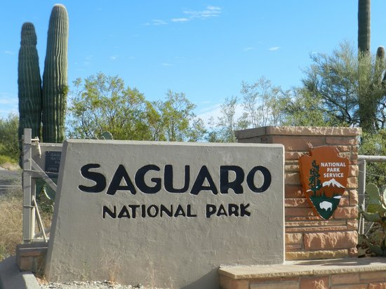 saguaro east foto van rincon mountain visitor center tucson tripadvisor. Black Bedroom Furniture Sets. Home Design Ideas
