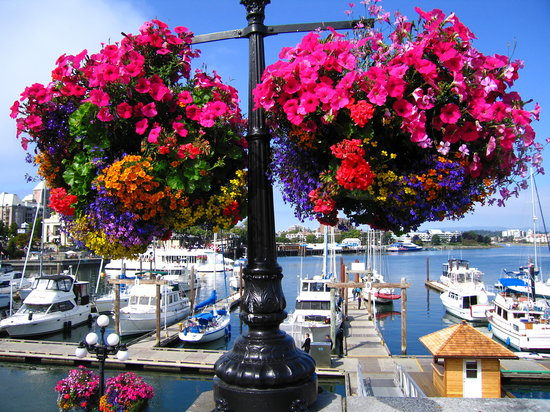 فيكتوريا, كندا: Victoria in bloom