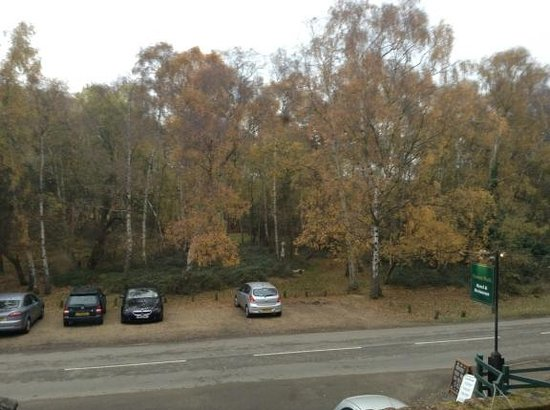 Forest Park Hotel: View from room