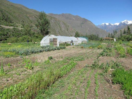 El Albergue Ollantaytambo: Organic Gardens